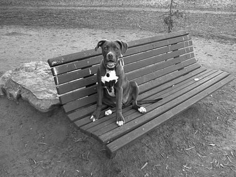 Leila at the Park by Ian Stevenson