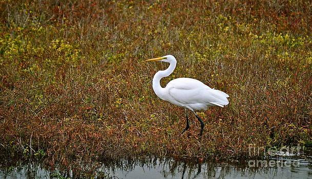 Gwyn Newcombe - Leisurely Egret