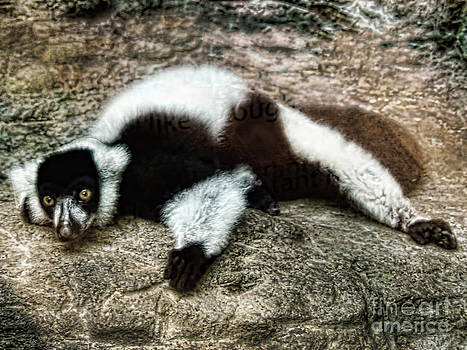 Anne Ferguson - Lemur in Relax Mode