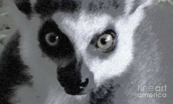Lemur by John From CNY