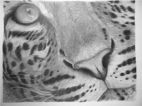 Leopard Close Up by Casper Venter
