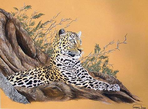 Leopard in tree by Vanessa Lomas