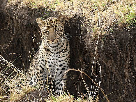 Leopard by Kathy Dunce