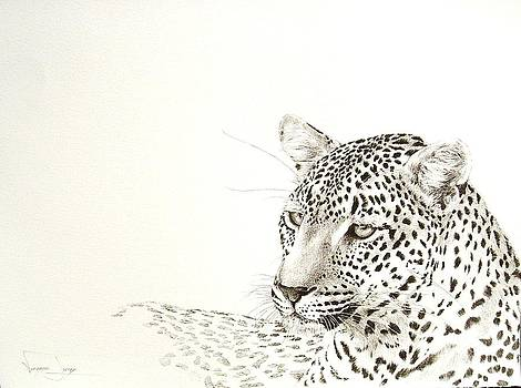 Leopard resting by Vanessa Lomas