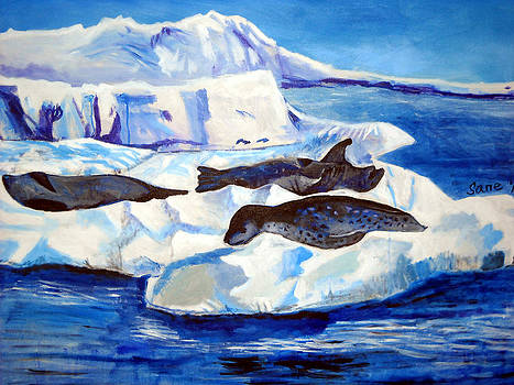 Leopard seals on ice by Eria Nsubuga