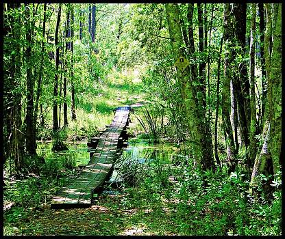Less  Traveled Path by Pam Utton