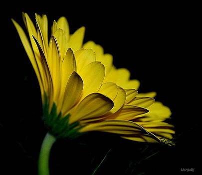 Let the sunshine in... by Marija Djedovic