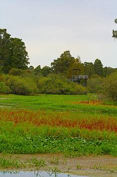 Lettuce Lake Observation Tower by April Wietrecki Green
