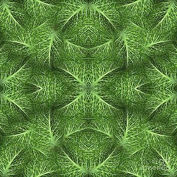 Sue Duda - Lettuce Live Green