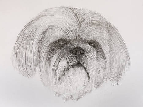 Lhasa apso by Jennifer Riefenberg