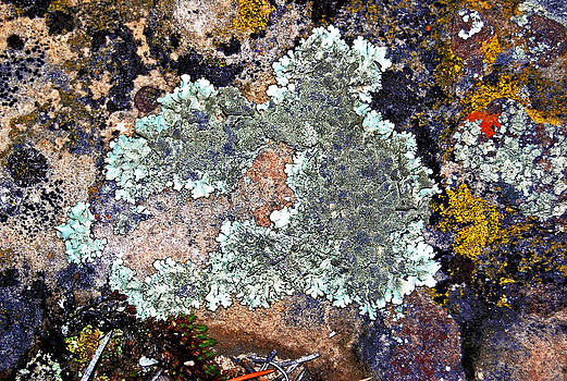 Lichens on a rock by Randall Templeton