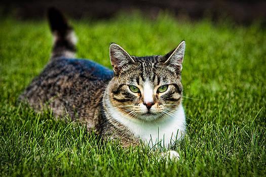 Matt Dobson - Life of a Cat