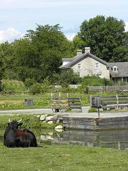 Peggy  McDonald - LIfe on the Farm