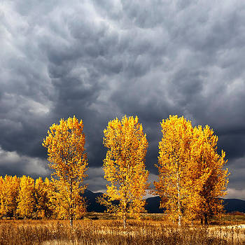 Light And Darkness by Evgeni Dinev