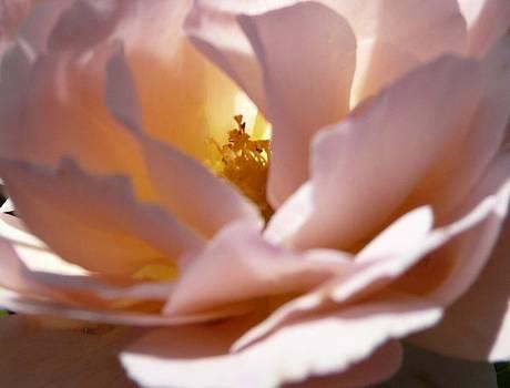 Angela Hansen - Light From Within