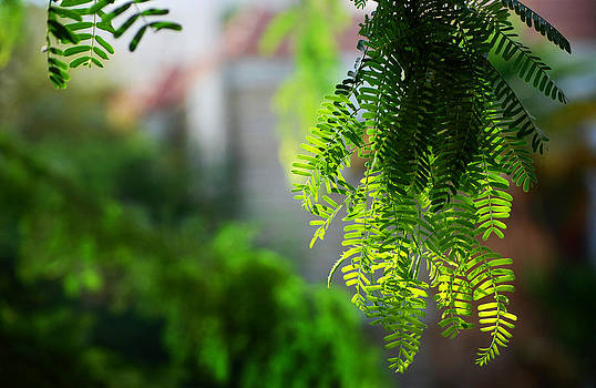 Lighted Leaves by Farah Faizal