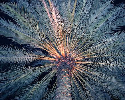 Lighted Palm by Diana McClure