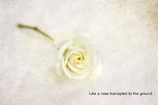 Like a rose... by Taschja Hattingh