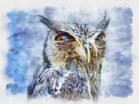Lil Owl by Ali Kat