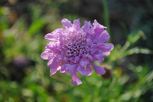 Lil Purple by Kimberly Harrison