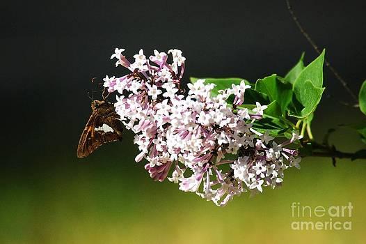 Lilac Landing by Crissy Sherman