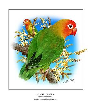 Lilians Lovebird 1 by Owen Bell