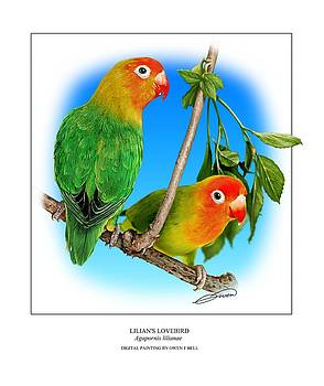Lilians Lovebird 2 by Owen Bell
