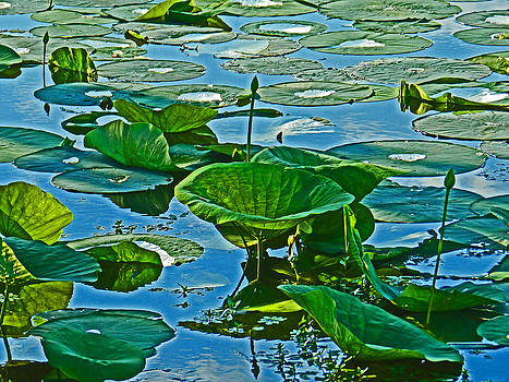Lilly Pads in the blue by Mamie Thornbrue