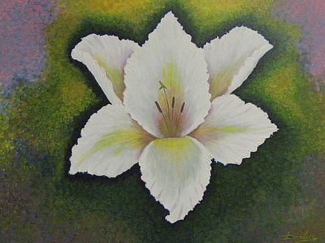 Lily by Dalia Gatautiene