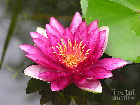 Lily Flower Pink by Diane Greco-Lesser
