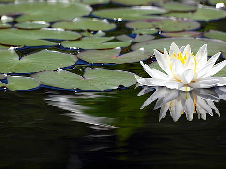 Lily by Kristal Kobold