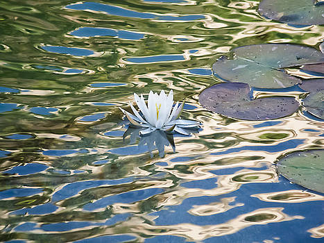 Lily Pad Flower  by Rob Nelms