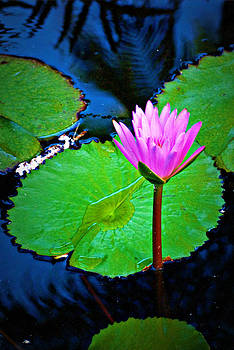 Lily pad by Naomi Hayes