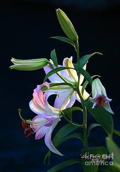 Patrick Witz - Lily Pod to Flower