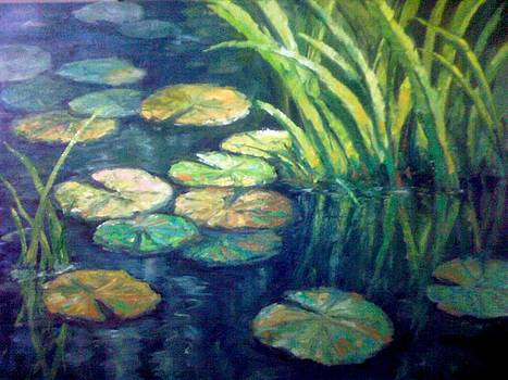 Lily Pond by Amber Munir