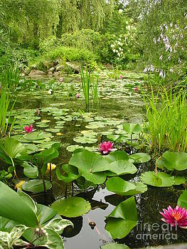 Lily Pond by Diane Greco-Lesser
