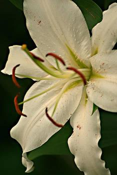 Michelle Cruz - Lily White Flower