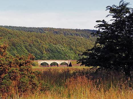 Lindley Wood by Steve Watson
