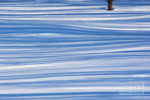 Lines in the Snow by Andrea Kollo