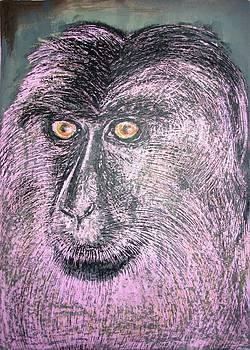 Lion Tailed Macaque by Jitendra Gavali