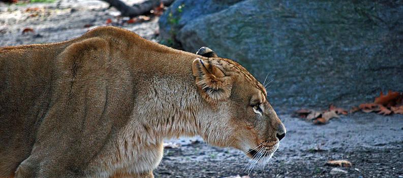 Michelle Cruz - Lioness