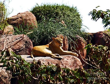 Lioness by Patricia Griffin Brett