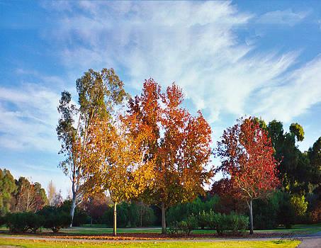Diana Haronis - Liquid Amber Trees