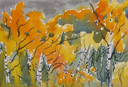 Little Aspen Meadow North of Steamboat Springs Colorado by Zanobia Shalks