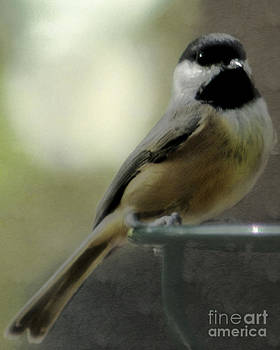 Little chickadee by Wendy Riley- Athans