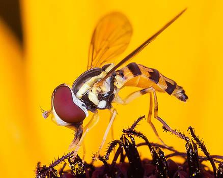 Little fly by Louis B