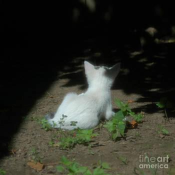 Mark Gilman - Little Kitten