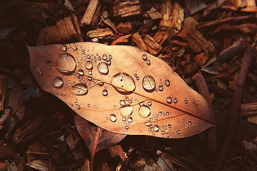 Little Leaf by Jacquie Waldman