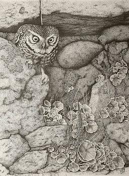 Little owl by Paul Parsons