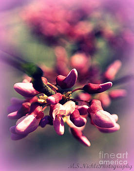 Little Pink Buds by Melissa Nickle